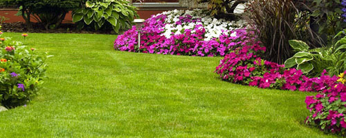 Welcome to Kiwi Landscaping. <br /> For all you lawn and hardscaping needs.